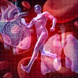 血管の拡張・収縮機能が高まり、血行がよくなる