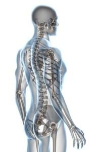 解剖学から考えるヒップアップエクササイズ