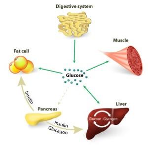 39770242 - blood sugar or glucose and insulin.